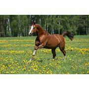 Пробиотики для лошадей фото