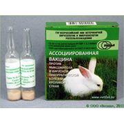 Вакцину против миксоматоза и вирусной геморрагической болезни кроликов