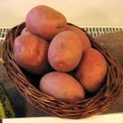 Продам картошку белароза фото