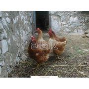 Ветеринарные препараты Полифепан®ветеринарный фото