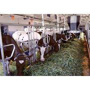 Пробиотическая кормовая добавка - Лактур фото
