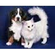 Препараты комплексные противомикробные ветеринарные фото