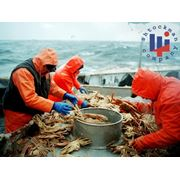 Костюм рыбацкий Рокон-Букса фото