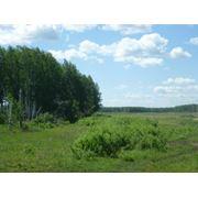 Загородный поселок Барышево – коттеджный поселок в 9 км от Челябинска.. фото
