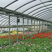 Промышленные и фермерские теплицы под ключ фото