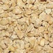Жмых кедрового ореха, 100гр фото