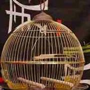 Клетки для мелких попугаев фото