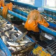 Очистные сооружения сточных вод от рыбокомбинатов фото