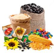 Утилизация испорченного посевного материала, непригодного для посева зерна и семян. фото
