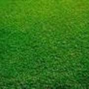 Универсальный газон фото
