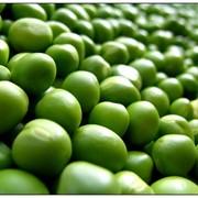 Горох зеленый фото