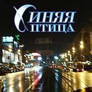 ОРГАНИЗАЦИЯ СВАДЬБЫ В Петербурге фото