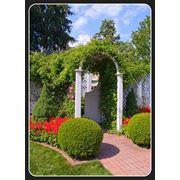 Арки садовые деревянные фото