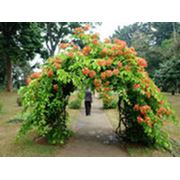 Садовые украшения фото
