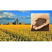 Рапс / Rape seeds CPT FOB Reni port - Black sea region фото