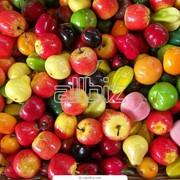 Переборка свежих фруктов и овощей фото