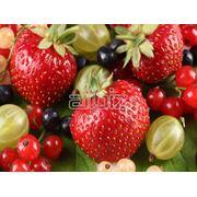 Свежие ягоды в ассортименте фото