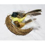 Птичка с птенцом в гнезде фото
