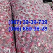 Мешки под редис 45*80 см фото