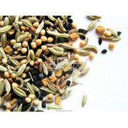 Семена зерновых культур в ассортименте фото