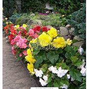 Семена декоративных растений в ассортименте фото