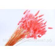 Лагурус цветной, 100г розовый фото