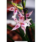 Экзотические цветущие растения фото