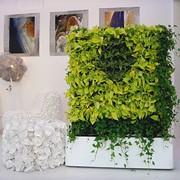 Вертикальное озеленение - фитопанели