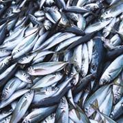 Продаем рыбу, морску рыбу Предоставляем услуги: переработки рыбы фото