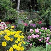 Цветники и розарии фото