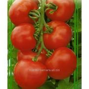 Семена томатов Мондиаль F1 фото