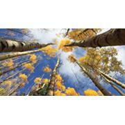 Услуги в области устойчивого развития фото