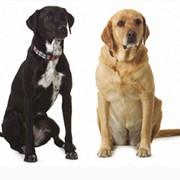Препараты ветеринарные фото