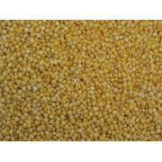 Пророщенные зерна злаковых и бобовых культур в свежем и термообработанном виде фото