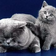 Корм сухой для кошек фото