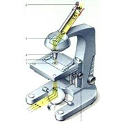Микроскопы оптические и электронные фото