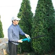 Обрезка деревьев в Казани фото