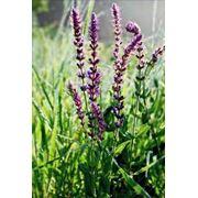 Кормовые травы фото
