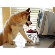 Ветеринарные препараты для собак фото