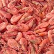 Технические условия полуфабрикаты из рыбы и морепродукты мороженые ТУ 9260-156-37676459-2013 фото