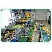 Оборудование для переработки овощей фото