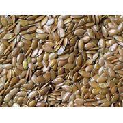 Лен масличный (возможен экспорт) фото