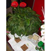 Биопрепараты для защиты растений фото