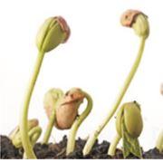 Регулятор роста Биосил фото