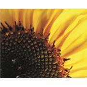 Протравитель семян Апрон Голд фото