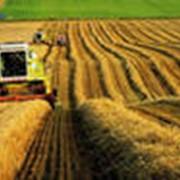 Услуги по обработке земли: уборка комбайном фото