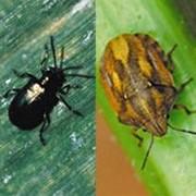 Инсектицид БИ-58 НОВЫЙ КЭ (400 г/л) фото