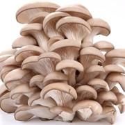 Обучение технологов грибного производства фото