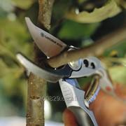 Обрезка плодовых деревьев и кустов. Догляд за садом (Комплексний) фото