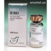 Вакцина Нобилис IB MA 5 10 х 2500 D